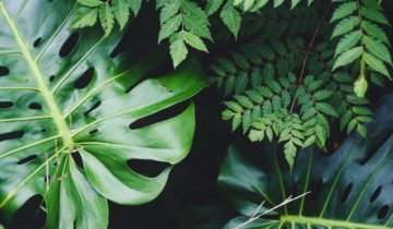 The 5 Best Plants to Enhance Your Interior
